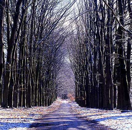 the Netherlands, Gelderland, Ginkelse Hei