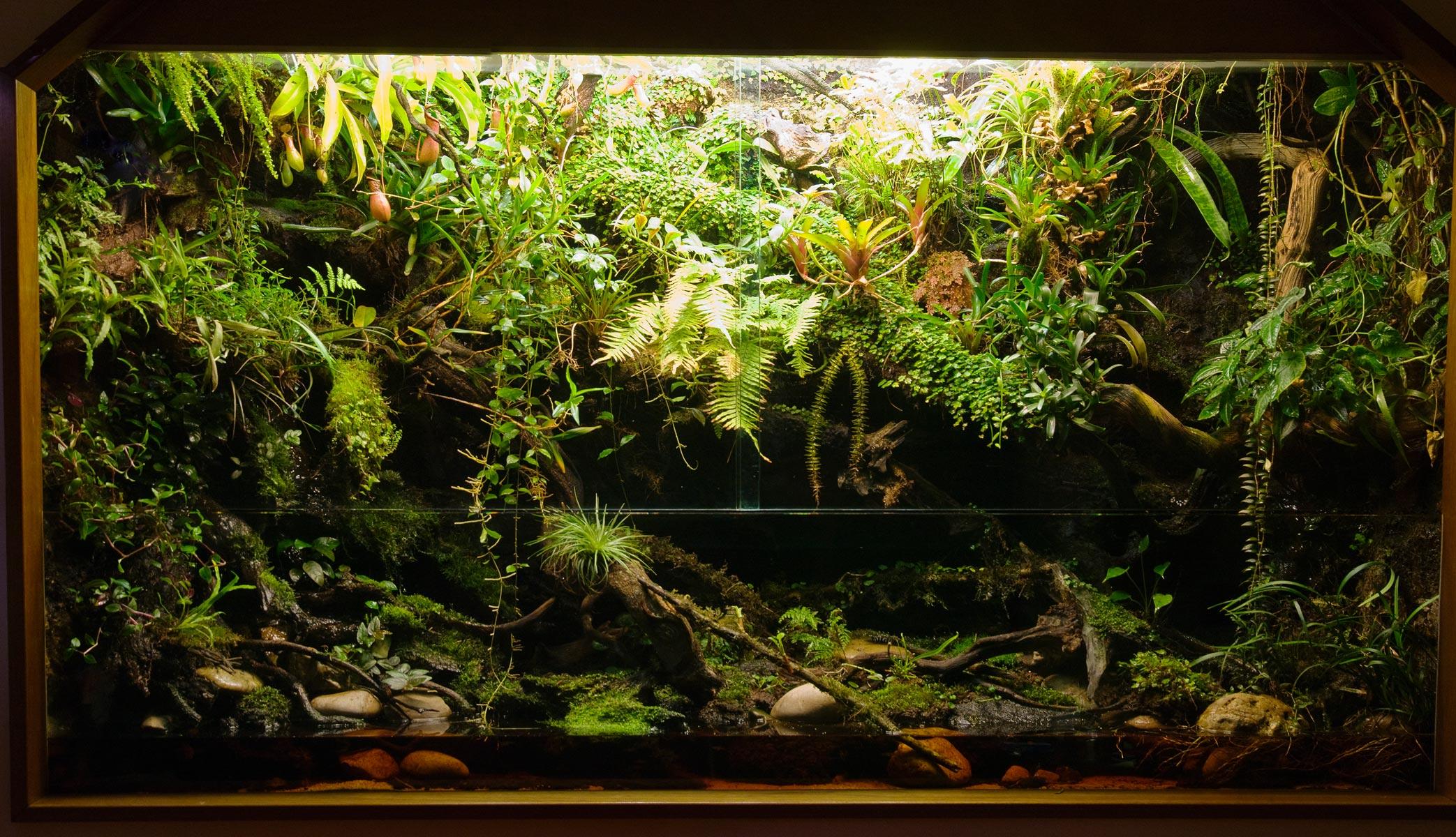 how to make a terrarium in a fish tank