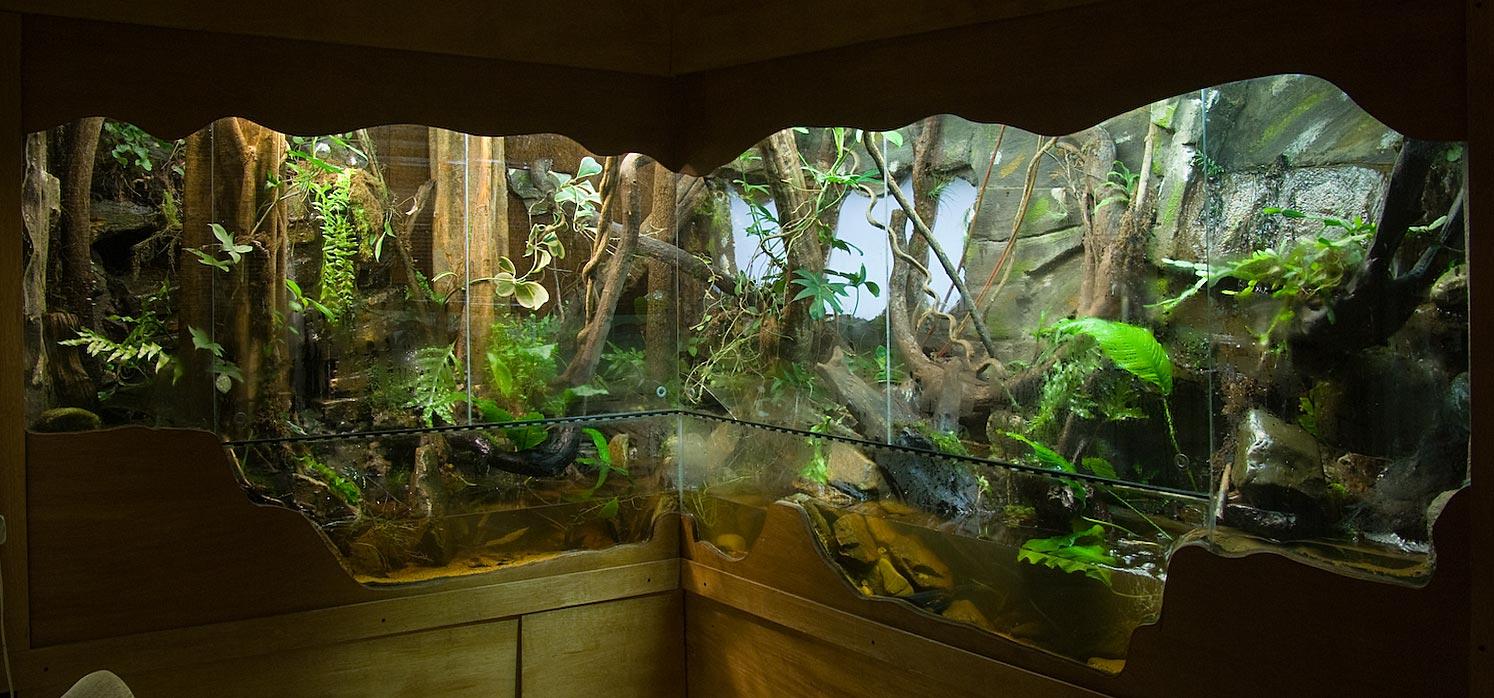 Vivarium ideas on Pinterest   Vivarium, Reptiles and Crested Gecko 10 Gallon Fish Tank Ideas